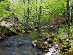 Río Cambillas, Saja-Nansa