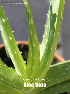 10 Awesome uses for aloe vera - to store your aloe vera gel, keep it in a jar in the fridge. For a longer shelf life you can mix in 500 UI vitamin C powder per one cup of aloe (this can be substituted for citric acid and/or vitamin E if that is what you have on hand). For a smoother consistency and/or to blend in vitamin C, put the aloe gel in your blender or food processor before storing in a jar in your fridge.
