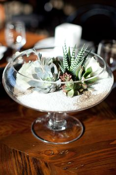 Terrarium with succulents that include zebra plant (Haworthia attenuata)