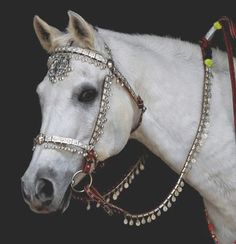 bridles for horses | ... USA, with the 'Arabian knight bridle', photo copyright Kenna Al-Sayed horse tack