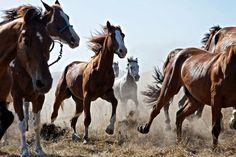 Wild Horses | olsonfarlow