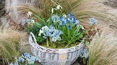 Keď sa objavia prvé kvetné púčiky, vyložte nádobu na balkón