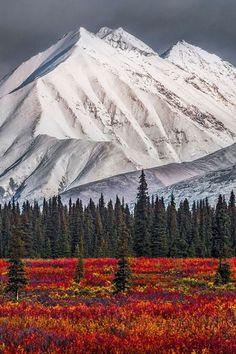 Alaska winter and fall at Denali National Park Alaska Winter, Beautiful World, Beautiful Places, Landscape Photography, Nature Photography, Alaska Travel, Parcs, Belle Photo, Nature Photos