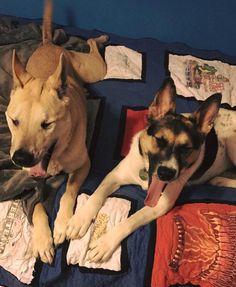 My two pups yawn in harmony. http://ift.tt/2qfkjhd