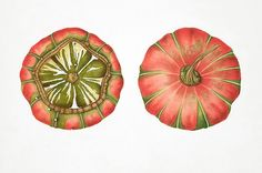 Image result for American Society of Botanical Artists