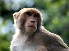 Radhanagari Wildlife Sanctuary - in Maharashtra, India