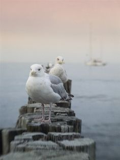 Lensbaby Ostseeurlaub - Glücksmomente Andrea Lück Aquascaping, Bird, Photography, Animals, Image, Baltic Sea, Autumn, Ad Home, Photograph