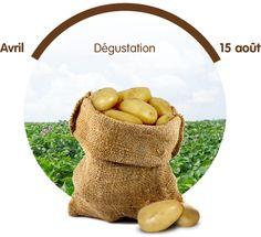 Pommes de terre primeurs, profitez-en vite le temps d'une saison ! Conservation, Burlap, Reusable Tote Bags, Apples, Hessian Fabric, Jute, Canning, Canvas