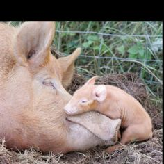 Napping with Mom :)