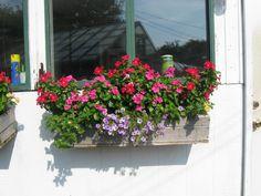 Full Sun Window Box