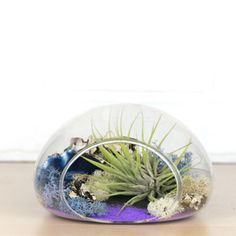Make a statement with the Suspended Sand Art Terrarium kit. Find glass terrariums at Apollo Box! Glass Terrarium, Terrariums, Sand Glass, Apollo Box, Colored Sand, Sand Art, Decorating Coffee Tables, Live Plants, Craft Activities