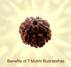 A seven mukhi Rudraksha has a lot benefits like it brings prosperity. As this Rudraksha is connected to Goddess Lakshmi, it brings wealth to the person wearing.  Read Here Benefits of 7 mukhi Rudrakshas - http://shivrattan.com/benefits-of-7-mukhi-rudrakshas/