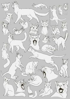 Anatomy Drawing Reference Cat Anatomy Drawing Cats Images Animal Drawings Drawing Ideas on How To Draw Animals Cats and Their Anatomy Over Millions Anatomy Sketch, Cat Anatomy, Anatomy Drawing, Animal Anatomy, How To Draw Anatomy, Cat Reference, Figure Drawing Reference, Anatomy Reference, Animal Sketches