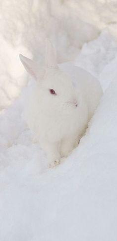Snow Bunny | Snow Bunny Related Keywords & Suggestions - Snow Bunny Long Tail ...