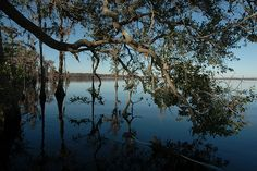 Lake Louisa, Clermont, Florida. I have so many wonderful memories of summers on this lake.