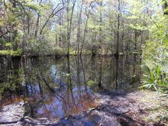 Yellow-white tail loop trail (near Jacksonville) - 6 miles