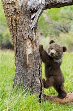 Bear Cub Leans Against Tree Trunk
