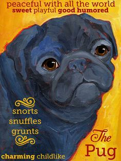 more pugs!  this one is available as a poster, print or magnet...great gifts for the pug lover who has everything!