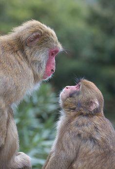 Mother and Child   Awaji Monkey Center #japan #hyougo