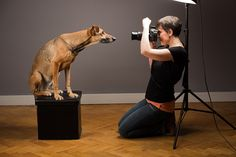 A day in the life of Pet Portrait Photographer.