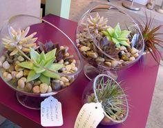 succulent terrarium - yes!
