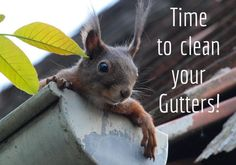 It's that time of the year again to check your gutters! #CleanGutters