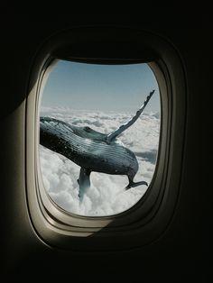 Photographer: Yuma M. Surreal Artwork, Surreal Collage, Surreal Photos, Collage Art, Creative Photography, Art Photography, Levitation Photography, Exposure Photography, Whale Art