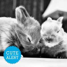 These two  are the cutest bunny i've ever seen they look so happy.They are  brother and sister, they were born at the same time and I think they are adorable