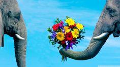 #Elephant #Elefante #Azul
