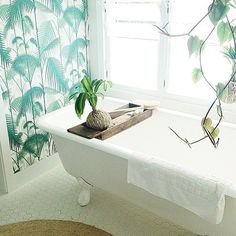 Going troppo over this one from @byron_beach_abodes  #tropicalsundaystyle  #thebathroomfiles #weekend #designinspiration #interiordesign #wallpaper #palmtrees #clawfoottub #hexigon #tileideas #tileinspo #tiles #bathroombliss #sundaystyle #inspo #interiorstyle #interiors #bathroomstyle #bathroomideas #designer #holiday #byronbay #style #byron by thebathroomfiles Bathroom designs.