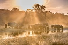 Ever wanted to get up close to elephants? Getaway's Vuyi Qubeka did, so she headed to Namibia's Zambezi Region. Photographs by Melanie van Zyl. Travel News, Wildlife Photography, Walking, Elephants, Adventure, Awesome, Van, Animals, South Africa