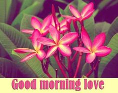 top pics of good morning flowers Cute Good Morning, Good Morning Picture, Good Morning Flowers, Morning Pictures, Good Morning Wishes, Wallpaper Pictures, Photo Wallpaper, Pictures Images, Good Morning Images Download