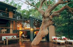 sydney beach hosue tree deck
