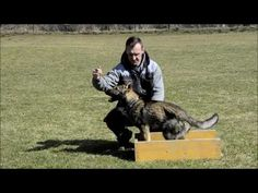 Eso spod Lazov - YouTube Music Publishing, Pets, Youtube, Youtubers, Youtube Movies, Animals And Pets