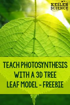 Teach Photosynthesis with a Tree Leaf Model – FREEBIE Create a model to help students understand photosynthesis a little bit better. Education Humor, Science Education, Science Experiments, Earth Science, Life Science, Science Penguin, Science Classroom, Classroom Ideas, 3d Tree
