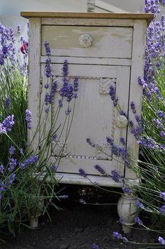 End table nestled in lavender fields. Lavender Cottage, Lavender Garden, Lavender Tea, French Lavender, Lavander, Lavender Fields, Lavender Flowers, Dried Flowers, Lavender Plants