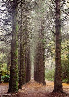 Breenhold Garden Mount Tomah NSW Australia Blue Mountain, Landscape Photos, Places To Travel, Country Roads, Explore, Mountains, Plants, Landscapes, Bridal