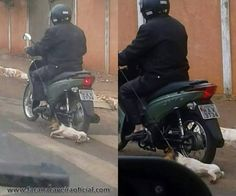 Prosecute Brazilian that dragged dog behind his motorcycle!   YouSignAnimals.org