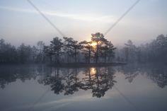 Enchanting Mist - Tapetit / tapetti - Photowall