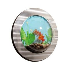 Brushed Stainless Framed Acrylic Bubble Wall Mount Fishbowl