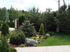 Хвойный сад в Подмосковье. Abitant Москва