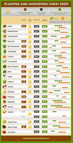 Pin on Life Hacks#hacks #life #pin When To Plant Vegetables, Planting Vegetables, Planting Seeds, Growing Vegetables, Growing Plants, Garden Types, Garden Beds, Garden Plants, Shade Garden