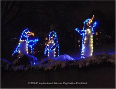 Penguin light display at Lincoln Park Zoo during ZooLights