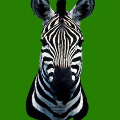 'Zebra' by PetraSage Framed Prints, Canvas Prints, Art Prints, V Neck T Shirt, Classic T Shirts, Posters, Stickers, Tote Bag, Animals