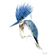 Kingfisher watercolor sketch #illustration #bird #watercolour