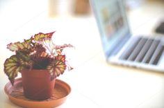 Desk plant by LarisaDeac on Desk Plant, Photo Art, Planter Pots, Photography, Photograph, Fotografie, Photoshoot, Fotografia