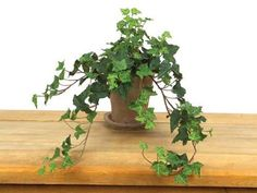 6 Potted Plants by Gordon Companies, Inc. $115.50. Shipping Weight: 25.00 lbs. Brand Name: Gordon Companies, Inc Mfg#: 30728979. Picture may wrongfully represent. Please read title and description thoroughly.. Please refer to SKU# ATR25779955 when you inquire.. This product may be prohibited inbound shipment to your destination.. 6 Potted Plants/English ivy vines/22''H/made of polyester/you get 6 potted plants