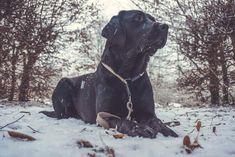 Build and train dog loyalty - a guide that-➡ Hundebindung aufbauen und trainieren – eine Anleitung die garantiert funktioniert – Flummi's Diary dog-bond-bond-dog-build - Labrador Retrievers, Chocolate Labrador Retriever, Retriever Puppy, Labrador Names, Yellow Lab Puppies, Smartest Dogs, Most Popular Dog Breeds, Love Dogs, Funny Dog Videos