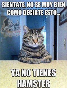 I love animals in Spanish?