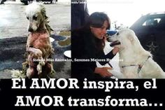 via laura camargo, moderador de la comunidad defendemos a los animales google+. Gracias Laurita.